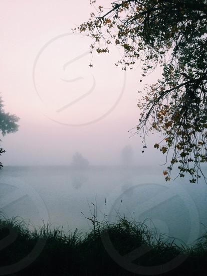 Fog cold autumn lake tree photo