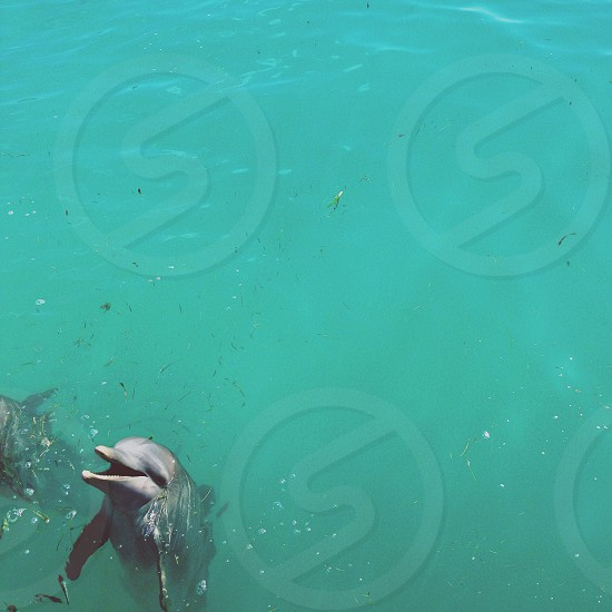 dolphin fish photo