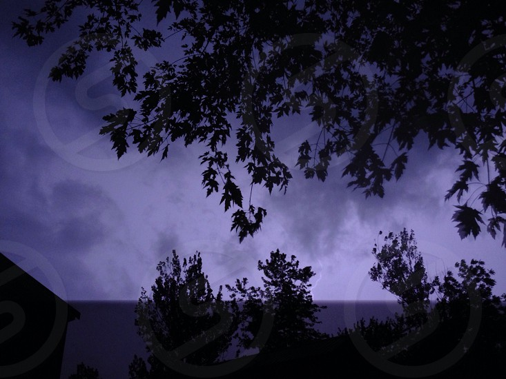 storm rain lightning trees branches leaves thunderstorm  photo
