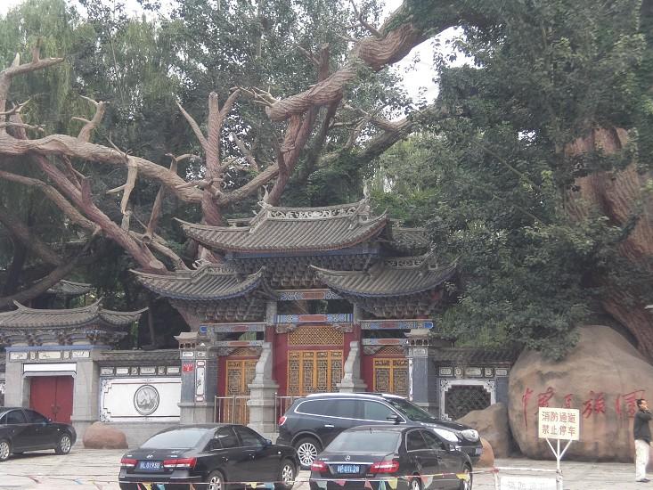 Beijing door built out of a tree photo