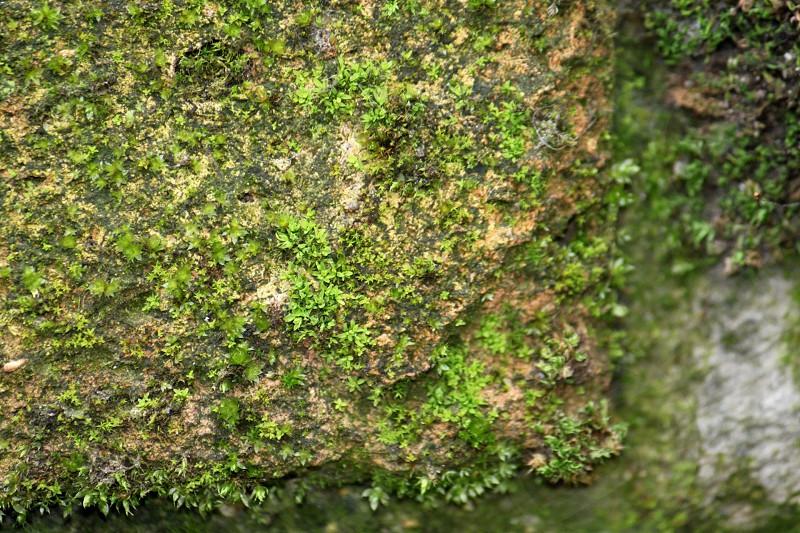 Moss growing on brick photo