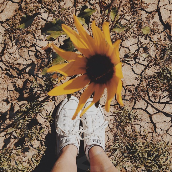 yellow petal flower photo