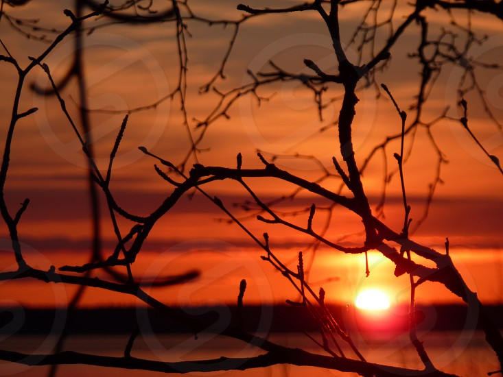 Sunset through the silhouette of trees. Red and orange sky.  photo