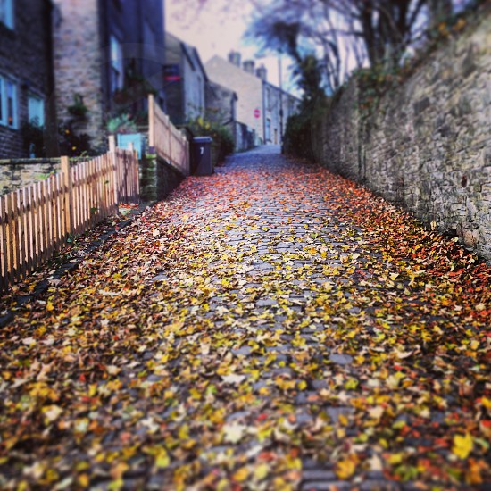 leaves on concrete road photo