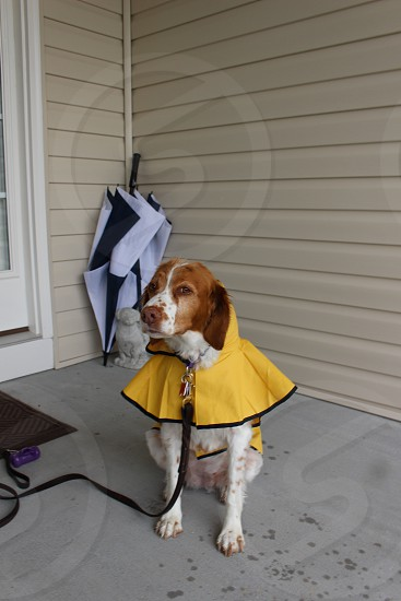 Brittany Ready for Rain photo