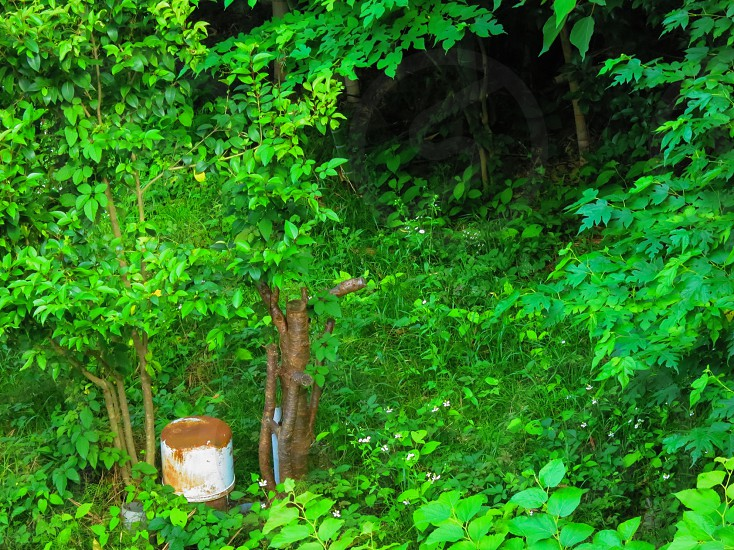 white pail surrounded by leaf plants photo