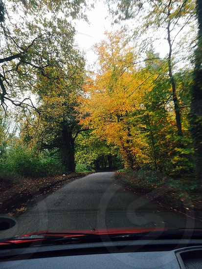 Autumn leaves in Hampshire country lane photo