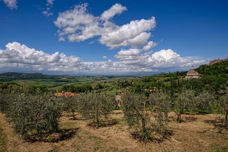Olive Grove near San Biagio Church photo