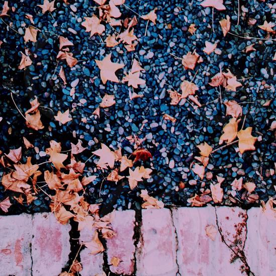 brown maple leaf photo