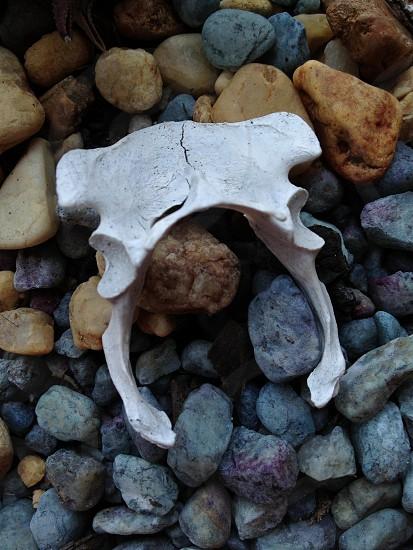 Bone garden. photo
