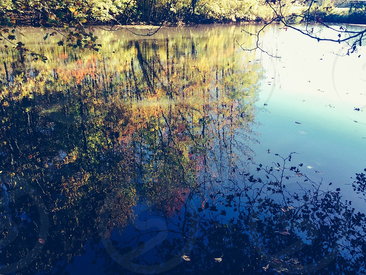 photography of body of water surrounded by trees photo