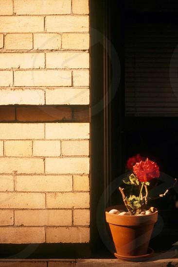 Flowers on building ledge photo