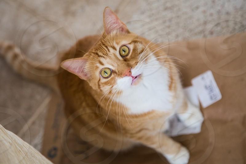 Orange cat looking up photo