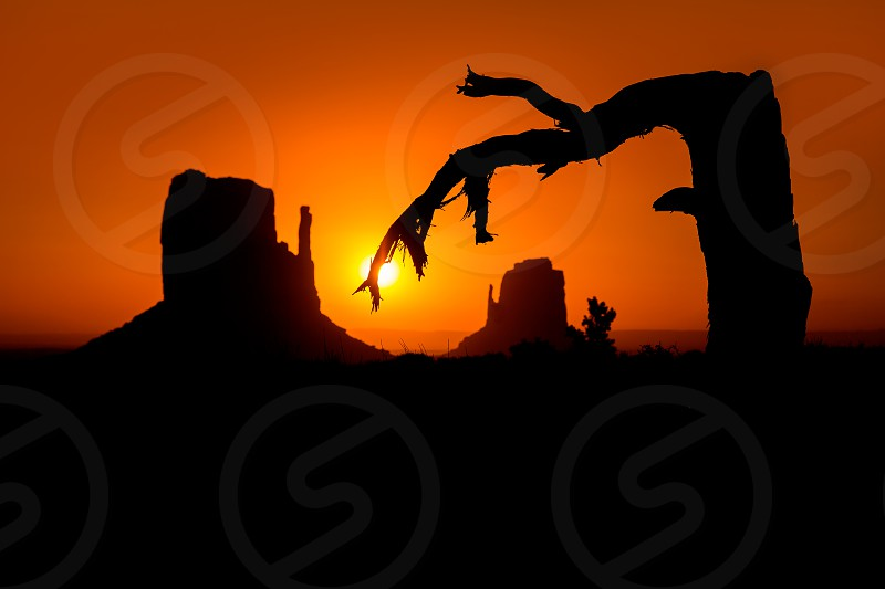 Sunrise at Monument Valley West and East Mittens Butte with dried branch tree photo