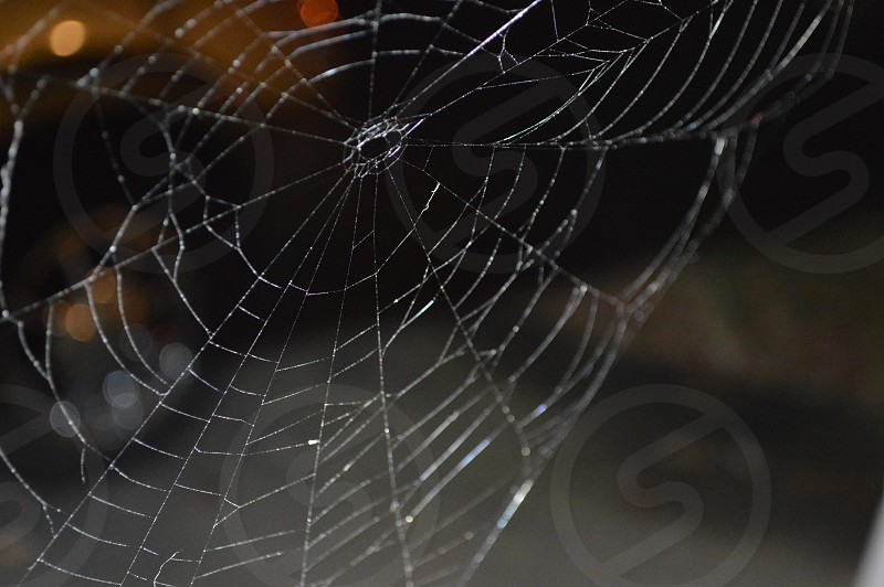 white spiderweb photo