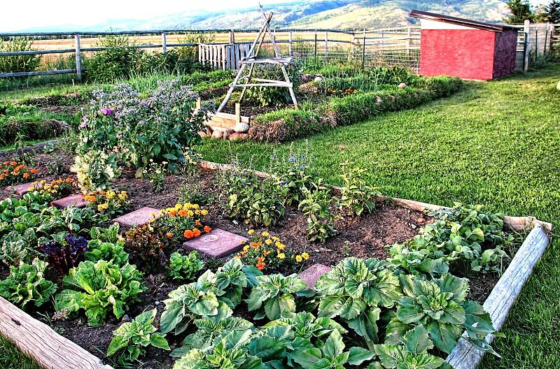 Rural organic garden in a small farm photo