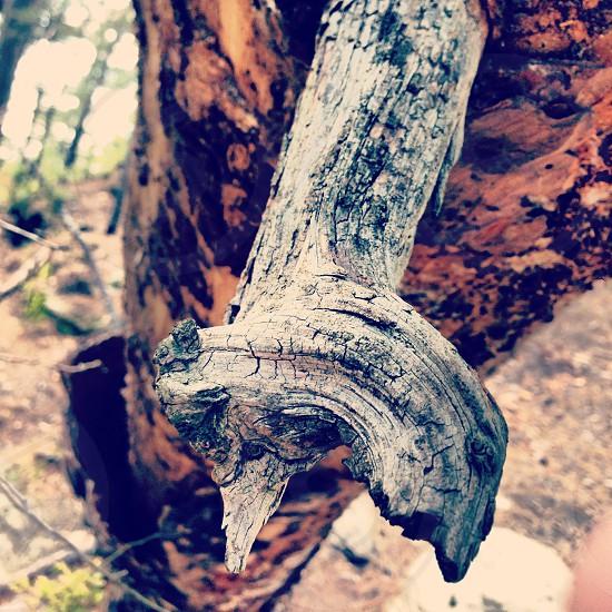 Knotty Wood photo