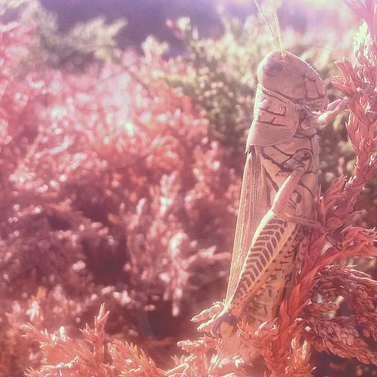 yarrow's grasshopper on brown plant photo