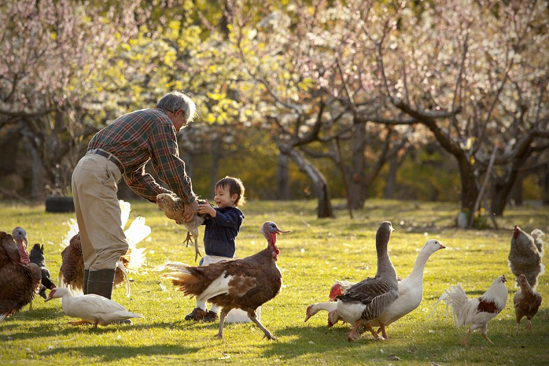 man holding the hand of boy standing in green grass with full of pets photo