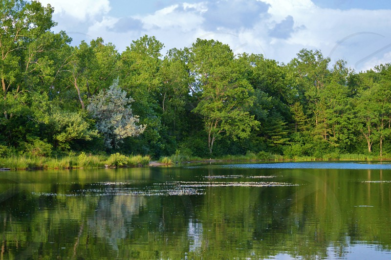 green tree beside the lake photo
