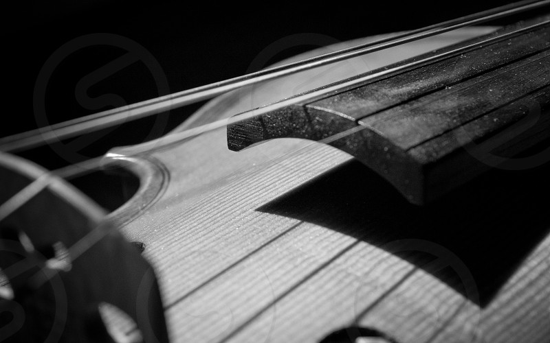 violin strings instrument black and white  photo