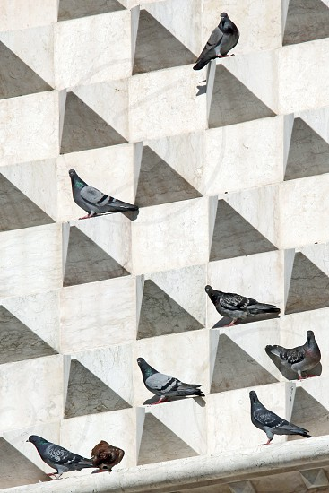 flocks of bird perched on grey concrete structure photo