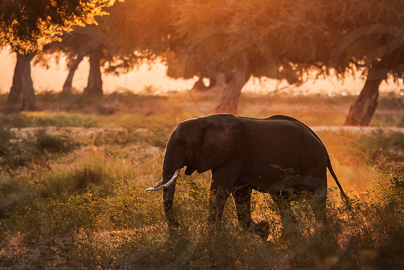 grey elephant on green tall grass by green trees during daytime photo