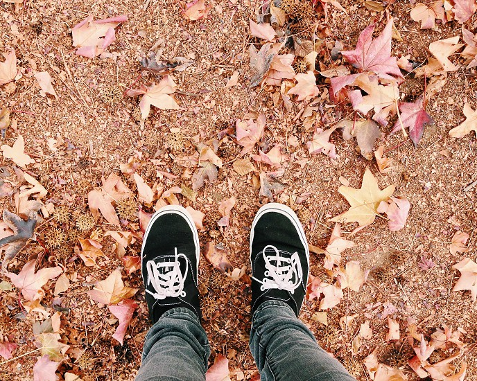 Vans leaves  photo