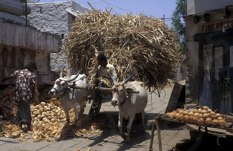 a oxwagon in the Village of Hampi in the province of Karnataka in India. photo