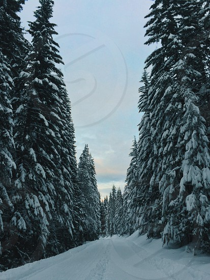 Mount hood forest Oregon snowshoeing photo