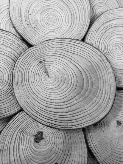grayscale close-up photography of wood slices photo