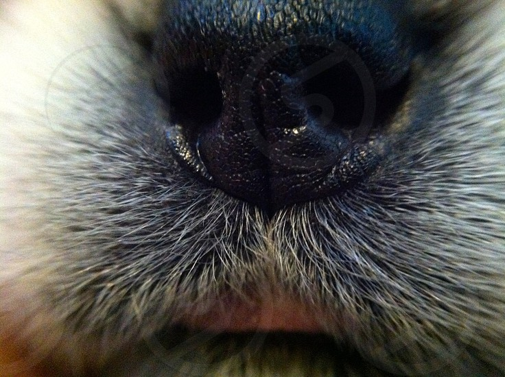 animal nose and mouth photo