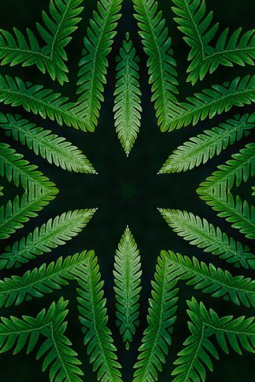 Kaleidoscope image of fern leaf photo