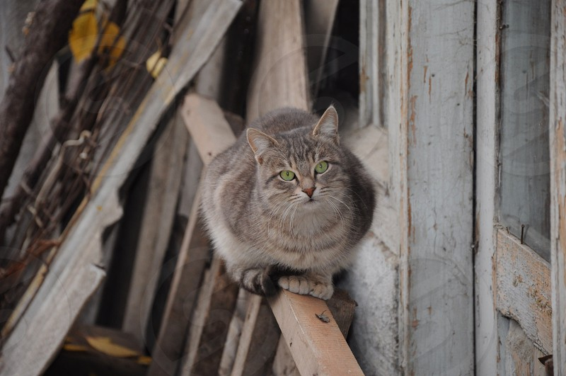 grey cat on wooden ladder photo
