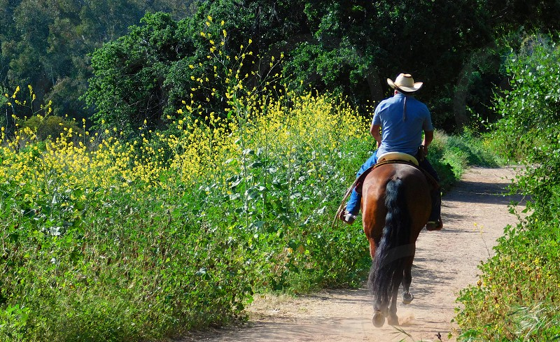 Seen from behind a horse and rider walk trot through a path surrounded by yellow Spring wildflowers photo