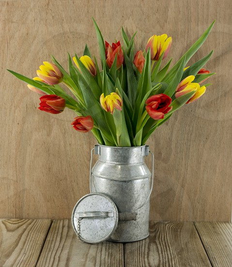 red and yellow tulip flowers on wooden background photo