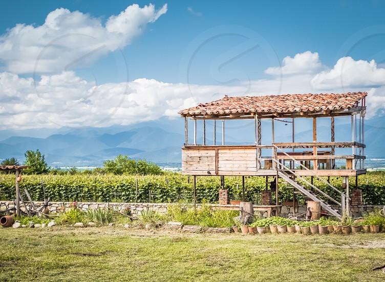 Wine winery vineyard grape photo