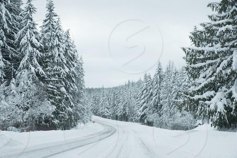 Driving road winter Oregon trees snow Mt Hood Oregon photo