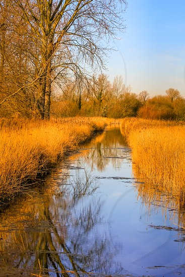 Late afternoon winter sunshine on the Wetlands at Fowlmere Nature Reserve photo