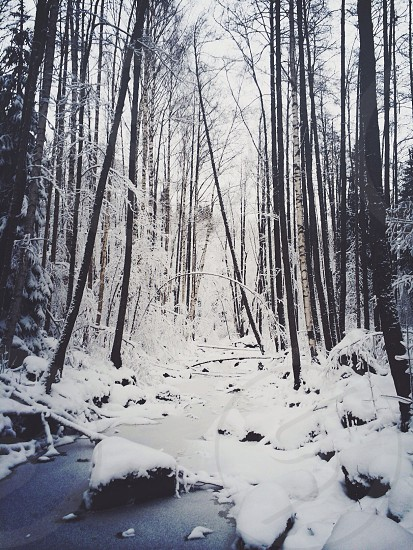 snow field forest panoramic view photo