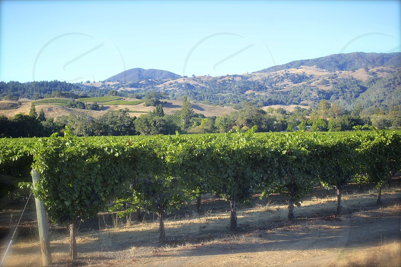 Sbragia Winery Dry Creek Valley Sonoma County California photo