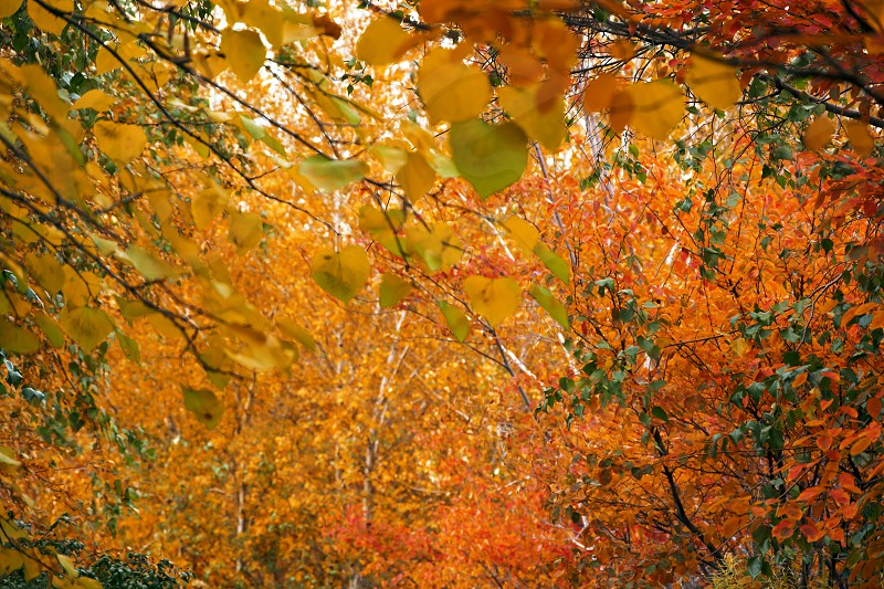 autumnal colored leaves in a forest photo