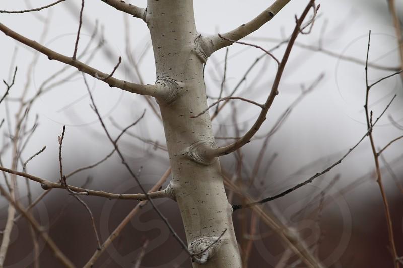 Aspen Rain photo