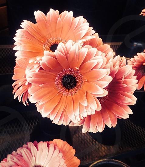 orange and white petal flower photo