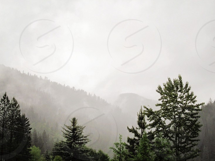 Summer Rain photo