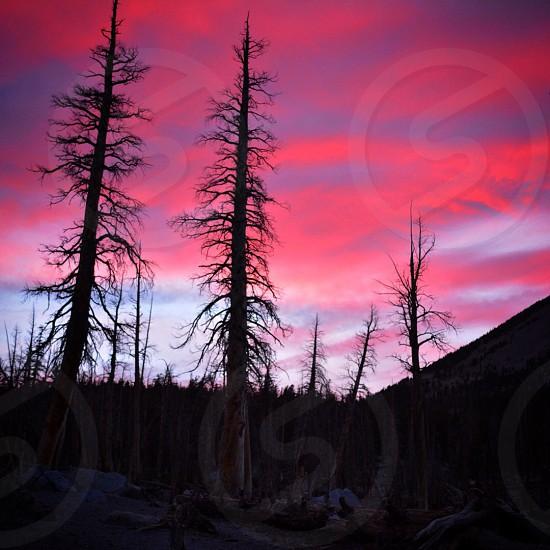 Fired up sunset - Horseshoe Lake Mammoth Lakes CA photo