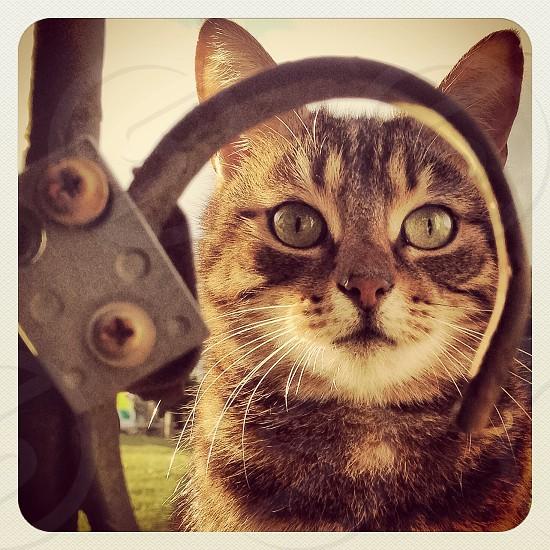 Cat Tabby Surprise Green-eyes Fence Gate Portrait photo