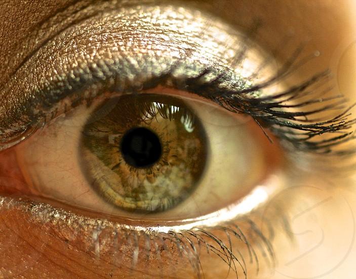 Macro photo of a green / hazel iris.  photo