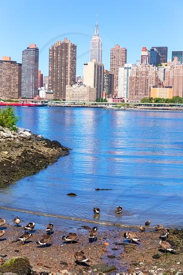 Manhattan New York sunny skyline East River ducks NYC USA photo