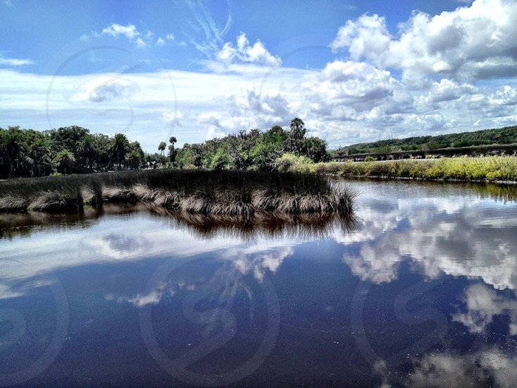 reflections in a Florida marsh photo